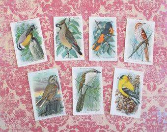 Seven Vintage Arm & Hammer Bird Trading Cards