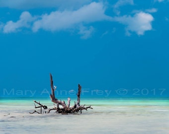 Driftwood and Turquoise Water at Snipes Point Florida Keys