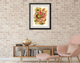 Botanical Print, Botanical Poster, Ernst Haeckel Nepenthes Illustration, Botanical Wall Art, Venus Flytrap, Pitcher Plant, Carnivorous Plant