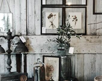 Vintage Botanicals, Herbarium flower Specimens  Modern Farmhouse Decor, Botanical Art, Vintage Botany