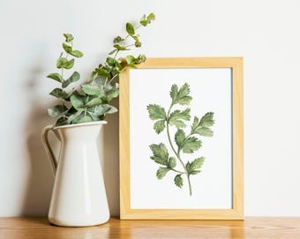 Cilantro - Cilantro painting - herb painting - Cilantro watercolor - home decor painting - kitchen art - dining room art - food art - herbs