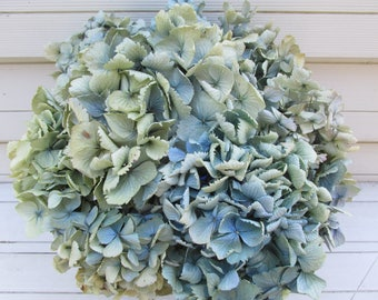 Dried  Hydrangea Flowers 11 Stems Light Blue, Green + Cream Color, Wedding, Bouquets, Craft, Home Decor, Rustic, Natural Floral Arrangement