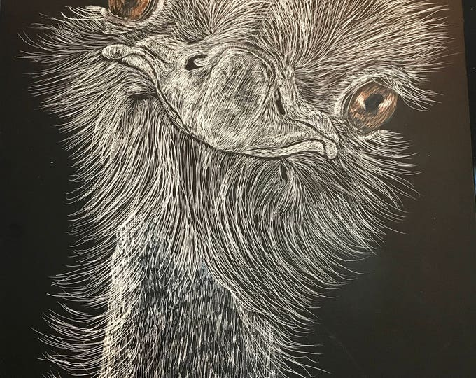 "Ostrich scratchboard -- one of a kind ""Ozzie"""