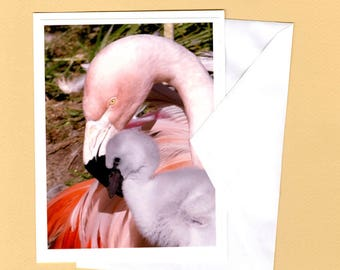 Flamingo Mother & Baby Photo Greeting Card