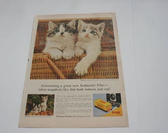 Vintage 1950s Kodak Film Kitten Ad, 1950s cat Advertising from Magazine to Frame, Wall Decor Decoration