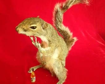 Swearing Squirrel, Taxidermy - Wise Guy Grey Baby Squirrel In a Two Finger Flying V Swear with Loose 'California' Wine Bottle