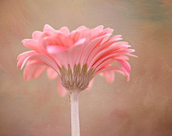 Pink Gerbena Daisy,Digital Download,Photograph,Flower,Wall Art,Print,Pink,Wall Decor,Art