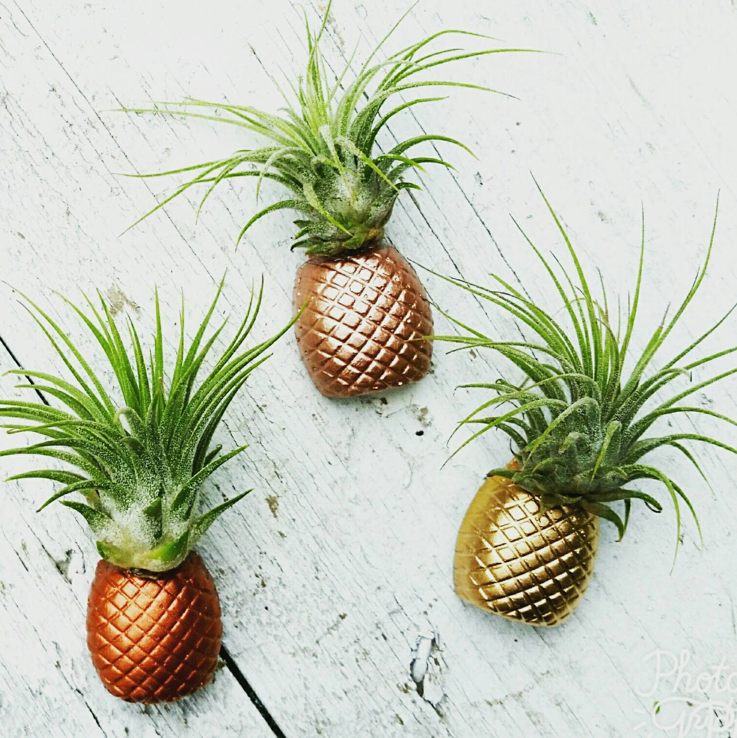 3 pineapple magnets air plant magnet pineapple decor air plant. Black Bedroom Furniture Sets. Home Design Ideas