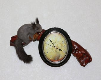 Siberian Grey Squirrel With Clock - Taxidermy Mount, Stuffed Animal For Sale - Gray Squirrel - ST3920