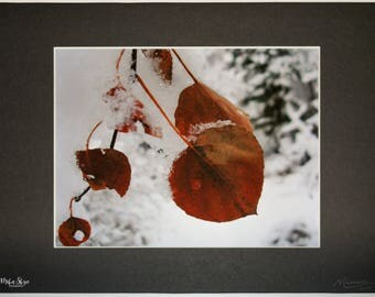 "Utah Winter Photo | Snowy Aspens | Leaf Nature Print | Winter Photograph | Nature Photo | Wall Art | Matted 8.5"" x 11"" 