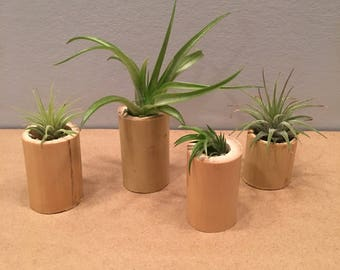"Bamboo Air Plant Holders With Air Plants (1"" - 3"" tall)"