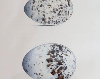 "Antique Print & Matte - Birds Eggs 1846 - from the Book ""Eggs of British Birds"""