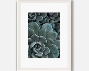 Succulent Art, small Succulent plants, Cactus Decor, Desert Printable, Modern Print, Plant photo, Plant Art, Cacti photography,  Cacti print