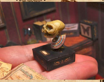 Miniature Egyptian Artificial cranial deformation , speciments box and 2 papyrus, curiosity cabinet, Fake Taxidermy , scale 1:12