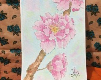 Double sakura cherry blossoms