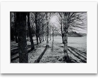 Trees, In the Shadows, Limited Edition Print, Two Sizes Available, Black and White, Landscape, Trees