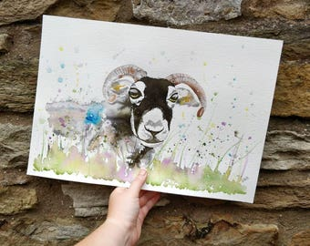 Swaledale Sheep. Original watercolour painting. A3.