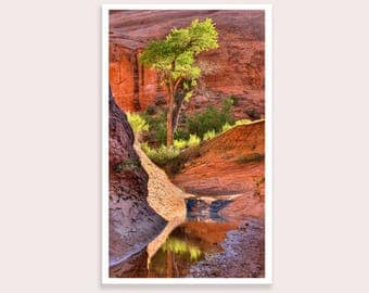 Colorful Utah Landscape Photograph, Desert Oasis Picture for Home or Office Wall Art, Free Shipping!