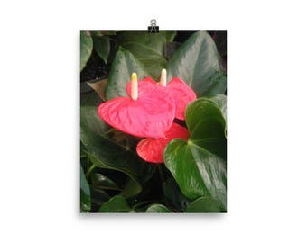 WALL ART Anthurium, Fine Art Photo Photography, Ultra Premium Luster Photo Paper, Plant, Flower, Floral, Nature
