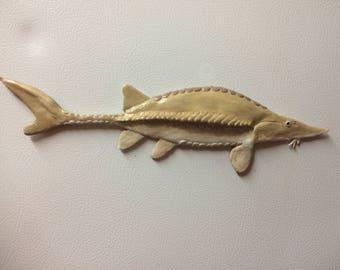 Pallid sturgeon fish magnet