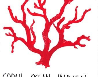 Corail océan Indien