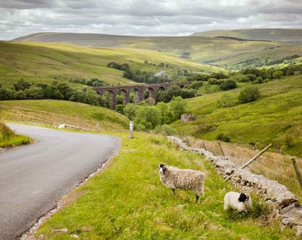 Sheep near Dentdale Viaduct in the Yorkshire Dales - Landscape Photograph - Fine Art Archival Print