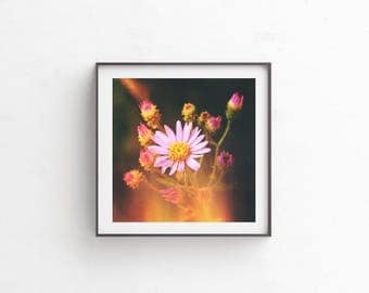 "instant download, floral photography, floral print, flower photography, wildflowers, wildflower print, nature photography, art print ""Aster"""