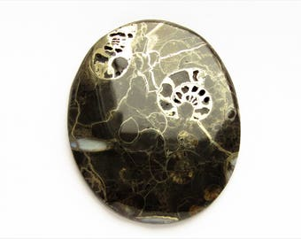 Ammonite cabochon 43x35x3 mm