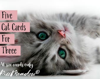 Five A6 cat cards for three! Tabby cat greeting cards. Blank photographic. Cat card set pack.
