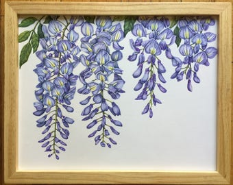 Botanical Art Colorpencil Drawing-Wisteria