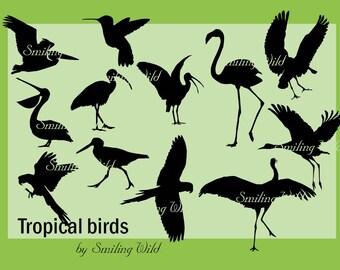 bird svg birds silhouette tropical bird clipart pelican ibis roseate spoonbill Florida crane  colibri  macaw ara parrot svg bird printable
