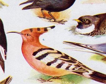 Set of Four Vintage Bird Charts #2