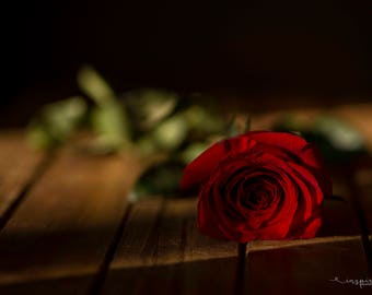 Single Red Rose Photograph