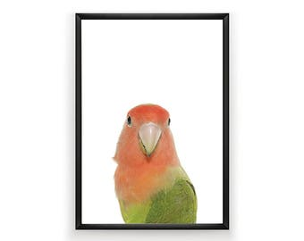 Budgie Print, Nursery Wall Art, Woodland Nursery Decor, Budgie Wall Art, Bird Print Wall Art, Animal Nursery Print, Woodland Wall Art