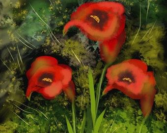 Red Callas