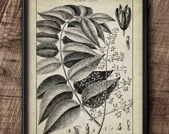 Botanical · Instant Download · Vintage · Art · Wall · Printable · Digital File #24