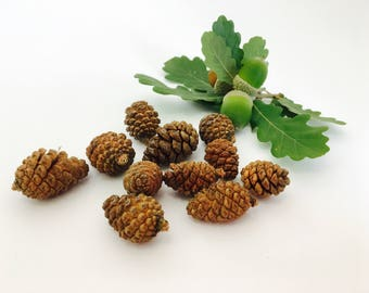 Pine Cone, fall decor, pine cones, nature decor