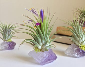 Amethyst Air Plant Crystal, Birthday Gift, Under 20, One of a Kind Gift, Unique Boho Decor, Office Gift, Crystal Cluster, Air Plant