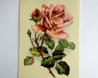 Vintage postcard  1970s Roses USSR Soviet postcard Old postcard Floral postcard Roses illustration Greeting card Postcard roses