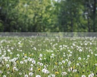ON SALE Field of Dandelions Digital Background, Dandelion Field Backdrop, Instant Download, Portrait Backdrop, Nature Background