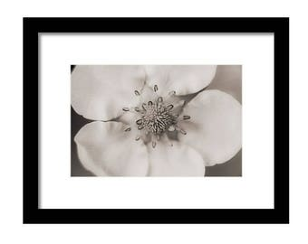 Untouched Flower Fine Art Photographic Print
