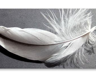 Feather Canvas Abstract Grey White Panorama Wall Art Picture Home Decor