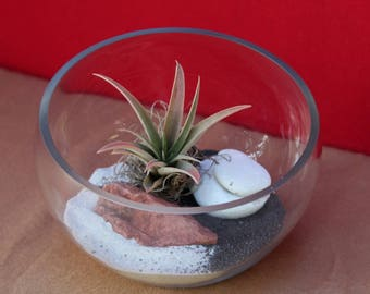 Live Peach colored air plant in a half moon shaped glass piece, decorated with white and black sand,moss, with red & white stones