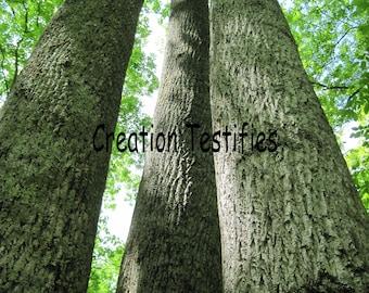 Nature photograph - Triple Trees