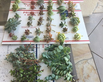 "50, approx 2"" to 5"" cuttings for your fabulous creations"