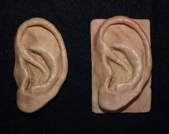 Realistic human ear magnet