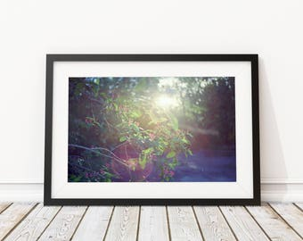 flowers No4 photography photography wall frame art