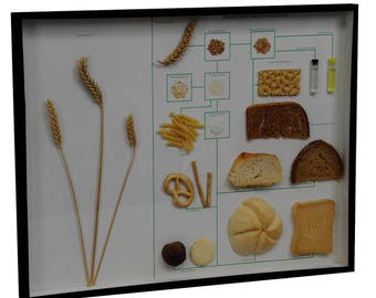 school teaching display corn and corn products