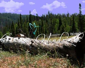 Digital Backdrop; Fallen Tree