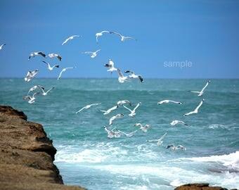 Seagulls Feeding - Digital Download